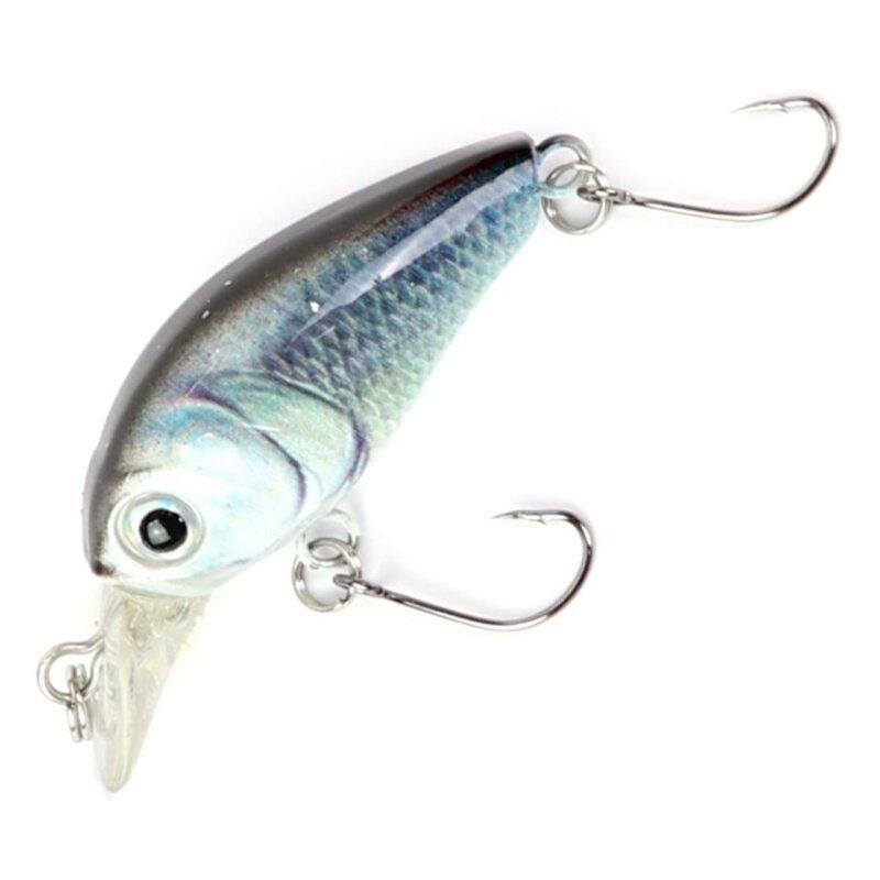 Weissfisch Blau