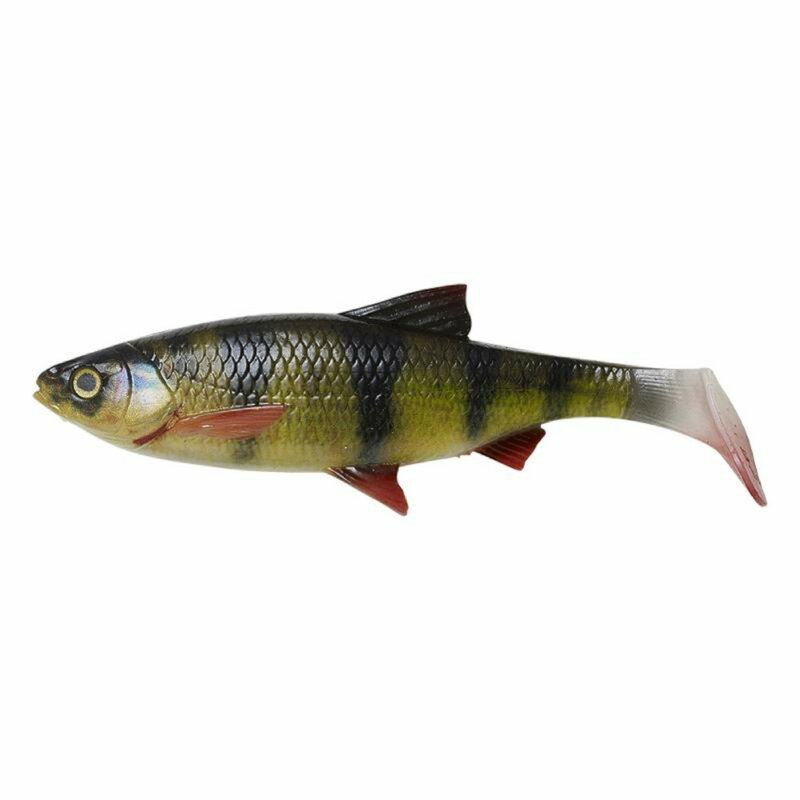 22 cm - Perch